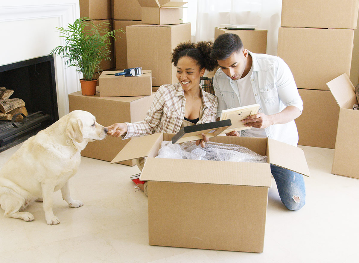 Moving with dogs advice